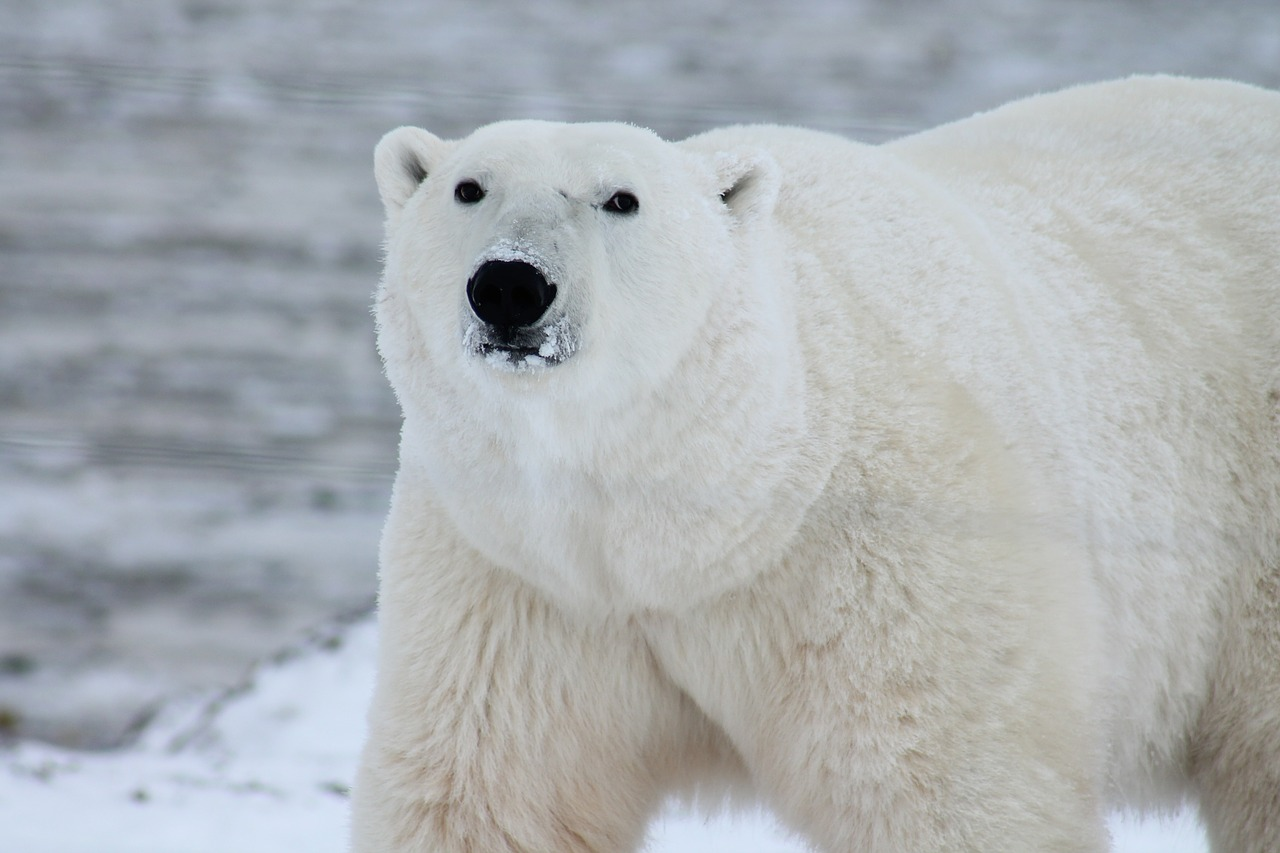 rynek niedźwiedzia (bessa)